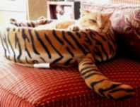 Tigger in his tiger bed